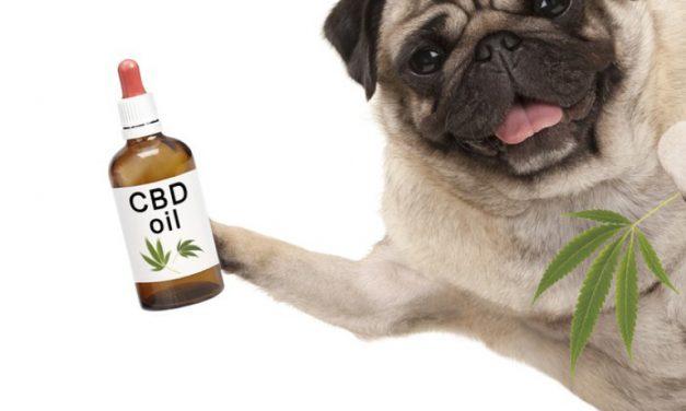 Is Pet CBD different from human CBD?