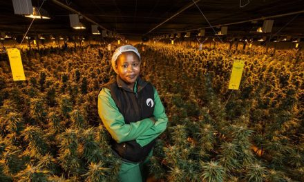 Lesotho cannabis farm becomes first in Africa to export to the EU
